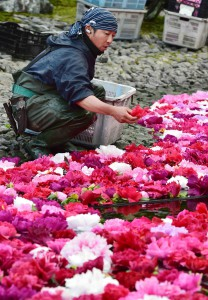 Yuushien staff placing peony blossoms carefully by hand