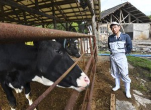 Takao Tsuruta gazes at his dairy cows. His milking shed (behind him) is now out of use since the facility was completely destroyed by the earthquake. (Kikuchi-shi, Kumamoto prefecture)