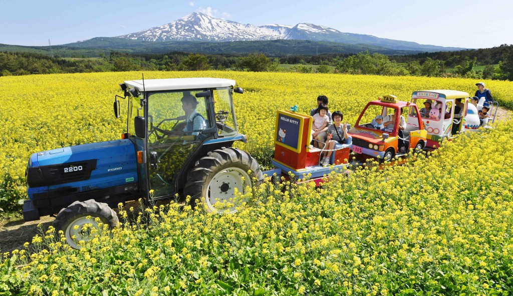 Visitors enjoying fun rides offered by a BDF-powered tractor in the yellow flower field with snowy Chokai Mountain in the background (in Yurihonjo-shi, Akita Prefecture)