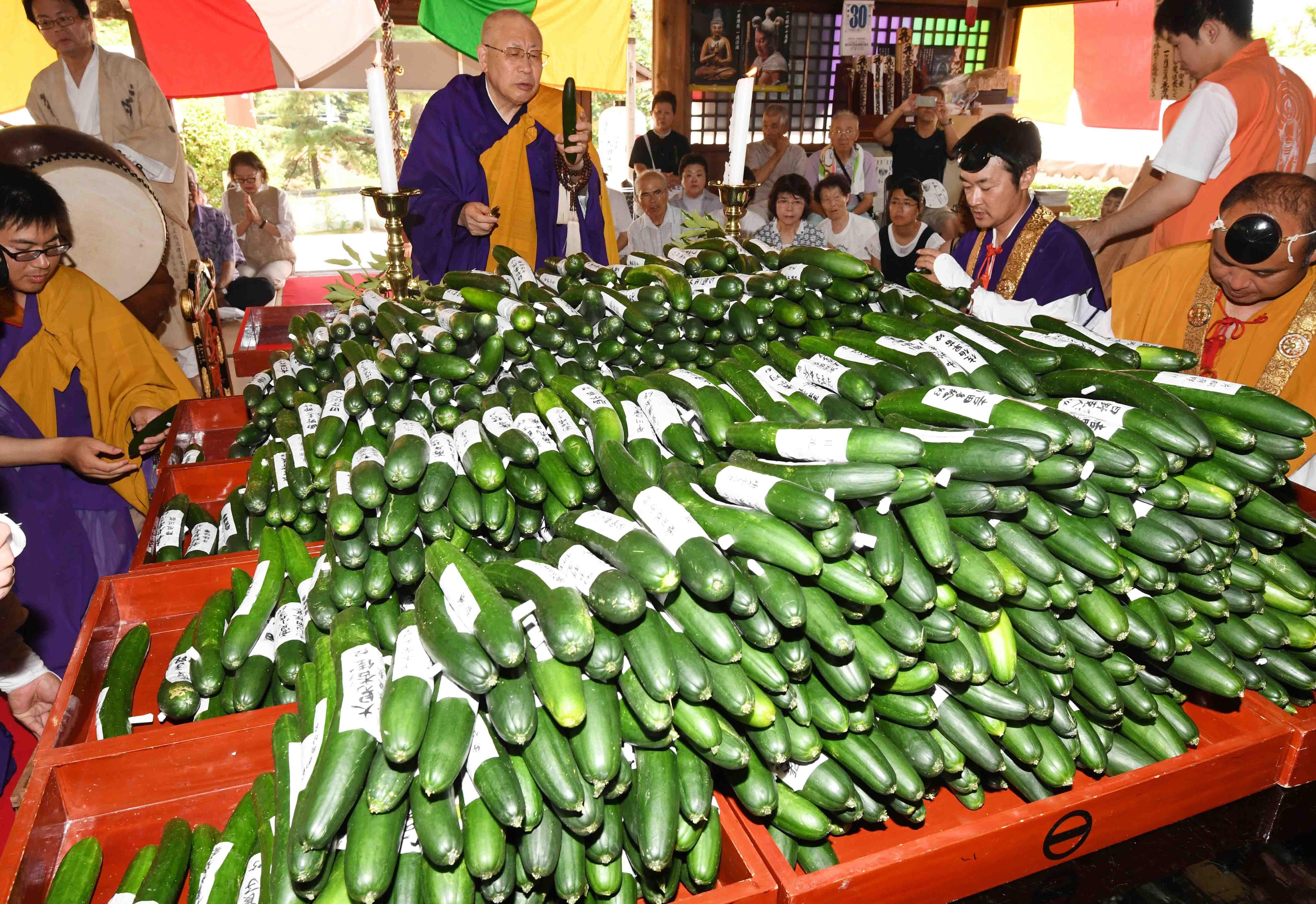 News】Cucumbers sealing services to return illnesses to soil (Saijo