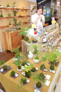 "Mosses are gaining popularity in the market of ""Mini Bonsai"" for interior decoration. (Hiroshima-shi, Hiroshima prefecture)"