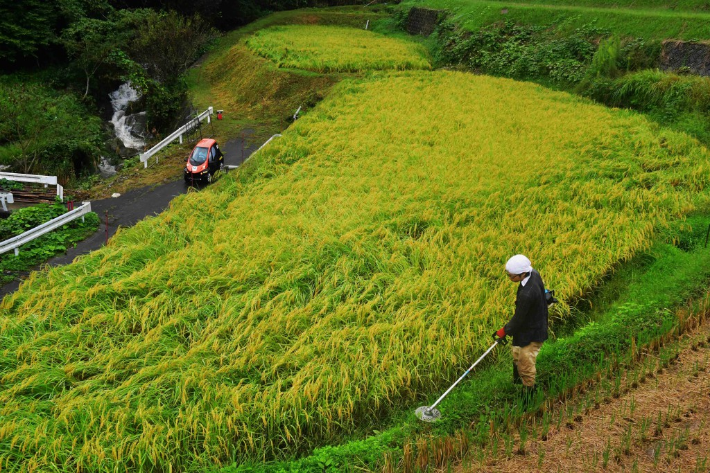 An ultra small electric vehicle following a slender path down the side of stepped rice paddy