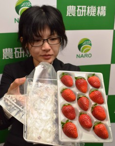 An efficient packaging technology with a special package and a tray has been developed by NARO's Agricultural Research Institute for a long-distance strawberry shipment by ocean.