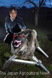 "A ""Monster Wolf"" with gleaming eyes scares wild animals out of the fields. (in Sapporo city, Hokkaido)"