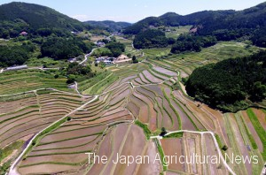 An aerial photo of the tanada rice terrace from a drone in the daytime. It's located in the mountain area approximately 30 kilometers away from the center of Okayama City.