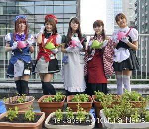 Akiba Maids planting herbs at Akihabara Vegetable Garden (on June 15, 2017, in Akihabara, Tokyo)