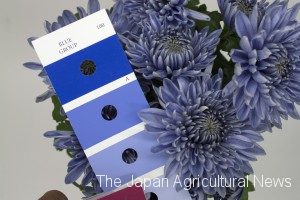 A photo shows blue chrysanthemums developed through genetic engineering (along with the Royal Horticultural Society's color chart). National Agriculture and Food Research Organization