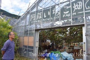 Murakami sadly looking at his strawberry house with which he so far has been giving up his business. (in Minamiaso village, Kumamoto Prefecture)