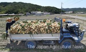 Yamaguchi loading newly-harvested onions on his nominsha