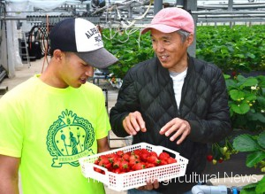 Hidaka (right) instructing how to grow strawberries to a new member of the team (left). The players work hard on the farm during the day on weekdays. (in Itoshima, Fukuoka Prefecture)