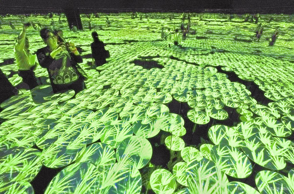 A digital rice field interacts constantly with audience as they tough it at the Mori Building Digital Art Museum in Tokyo's Odaiba.