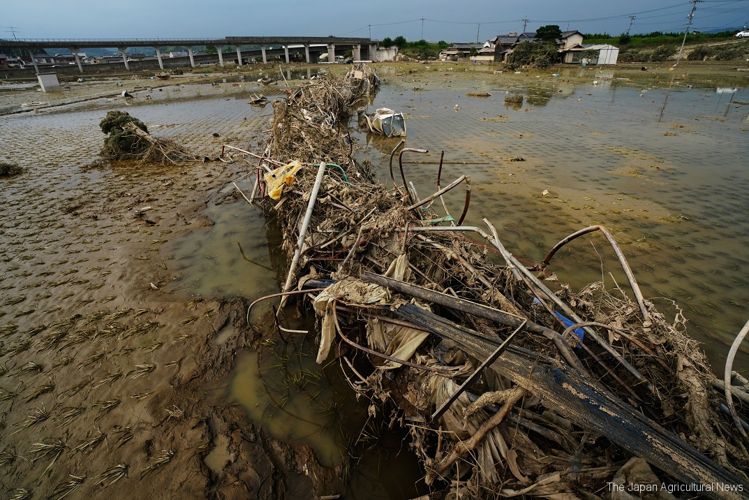 Scrap iron and wood that flew into the farmlands when the Oda River broke its banks are seen piled up in the rice paddies in the Mabicho district of Kurashiki, Okayama Prefecture, on July 11.