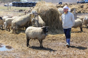 Mr. Muto joins Hokkaido's sheep project at Shiranukacho, near Kushiro city.