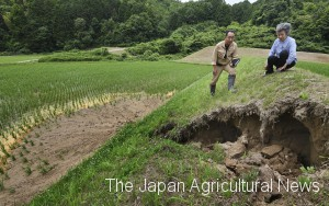A female farmer (right) pauses to look at a hole measuring 5 meters in diameter in her rice field caused by an earthquake in Osaka on June 18.