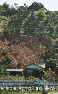 A gouge caused by a landslide following torrential rain is seen on July 10 on a collapsed slope with citrus trees in Uwajima, Ehime Prefecture.
