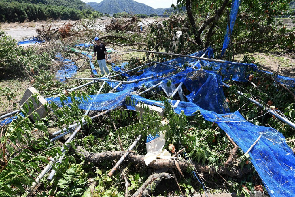 The swirling Takahashi river swept away all the efforts of peach trees the Kariya family had made in Okayama prefecture.