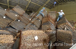 Officials of a local farm cooperative clear up the collapsed containers of potatoes in a storage facility in Atsuma, Hokkaido, on Sept. 7.
