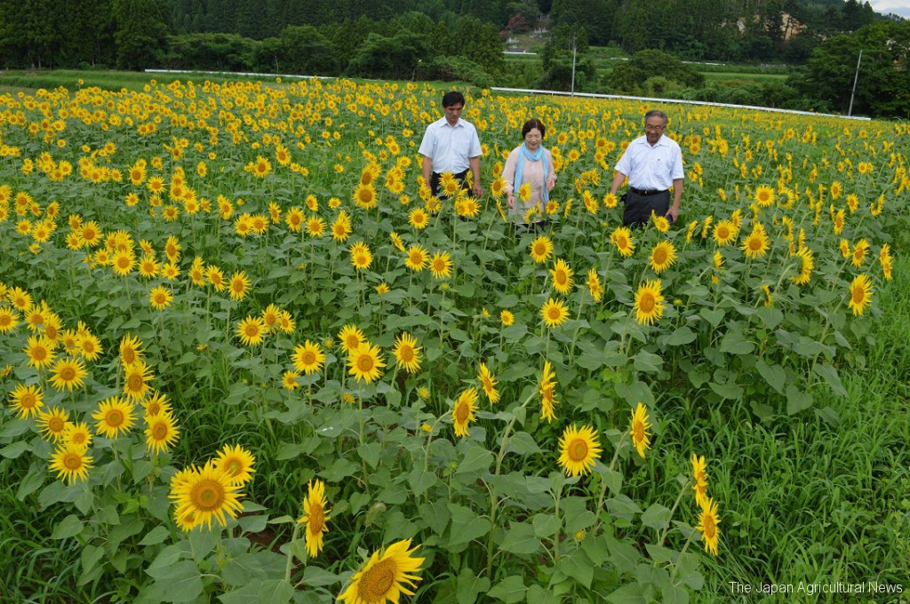 Tomoko Nemoto (center) and members of the Okuma town sunflower project speak about future activity plans at a sunflower field in Okuma, Fukushima Prefecture.