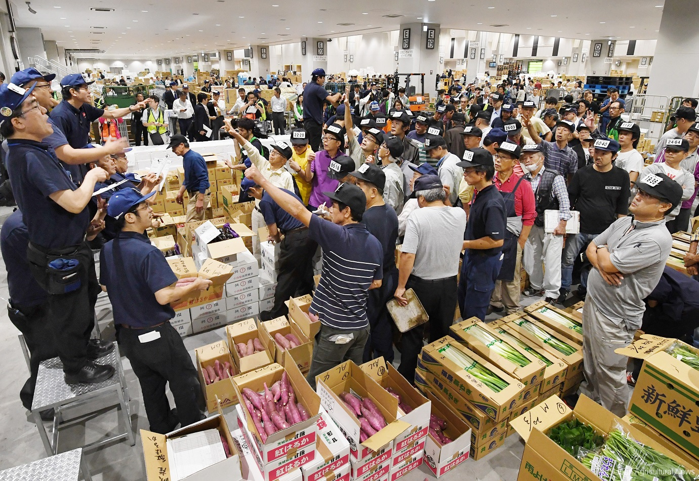 The newly opened Toyosu market in Tokyo held the first auctions for bidding on Oct. 11.