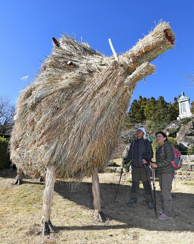 "Japanese tea growers decorated a giant pig with ""susuki"" pampas grass in Shizuoka prefecture."