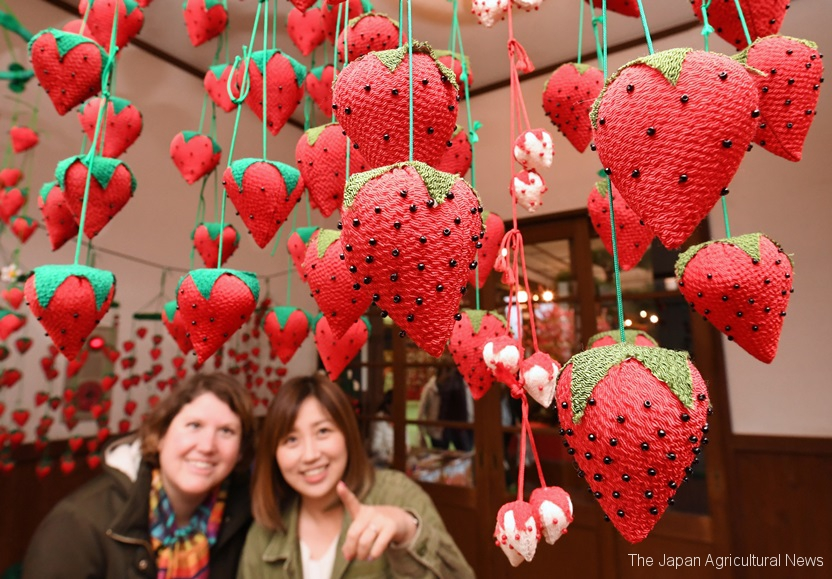 Strawberry-shaped handmade dolls are hanging from ceiling in Mooka, Tochigi prefecture.