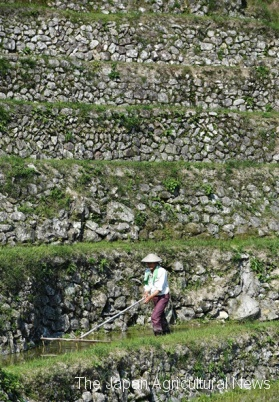 4.A farmer walks along Maruyama Senmaida rice terraces in Kumano, Mie Prefecture, with walls built using natural stone masonry.