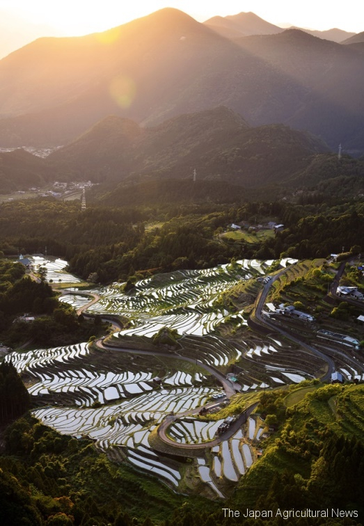 1.Maruyama Senmaida rice terraces filled with water in Kumano, Mie Prefecture, are seen shining at dusk, reflecting the sunlight.
