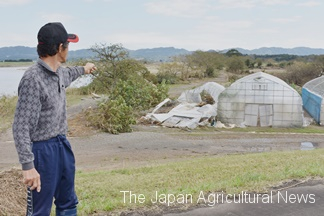 The typhoon tore down this man's nurseries. (In Marumori Town, Miyagi Prefecture)
