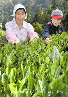 Katsuyama working with Kyoko Fukushima (left) and other volunteers to preserve the unique scenery.