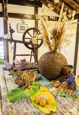 """Spinning yarn, cotton flower festival"""