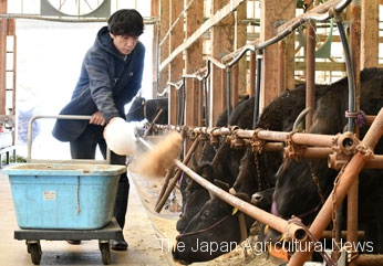 Tanaka keeps 50 mother cows. His calves are highly rated and always priced higher than the market average.