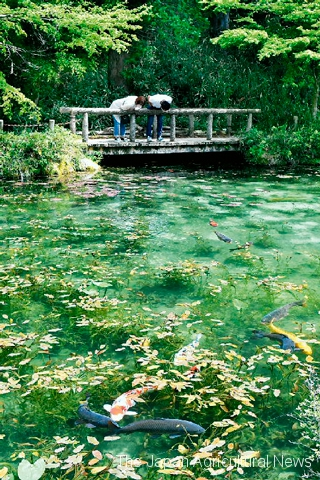 """""""Monet's Pond"""" with Koi carp swimming elegantly in the clear water (in Seki City, Gifu Prefecture)"""
