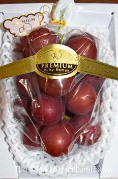 Ruby Roman high-grade grapes are sold at the Kanazawa City Central Wholesale Market in Kanazawa, Ishikawa Prefecture.